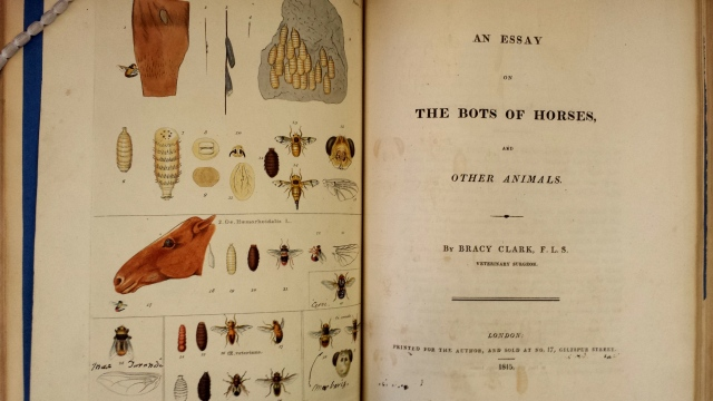 Bracy Clark. An essay of the bots of horses and other animals (1815)